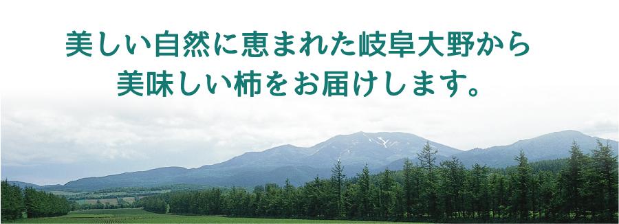 美しい自然に恵まれた岐阜大野町から美味しい柿をお届けします。